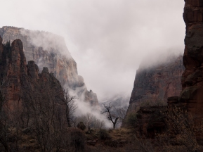 Foggy winter in Zion National Park
